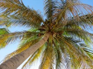 Maria La Gorda Cuba palm tree beach playa