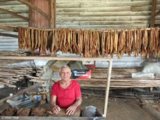 Old man rolling cigars in Pinar del Rio region