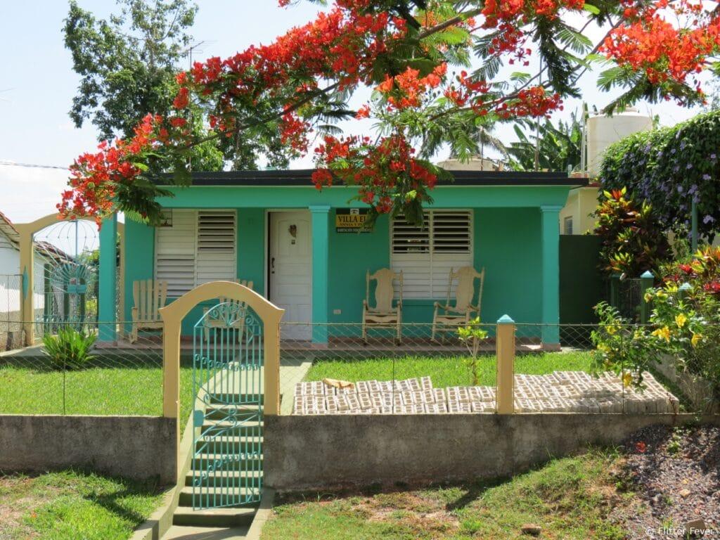 Casa house Vinales Cuba orange tree