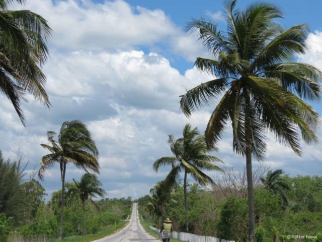 Cyclists bike road Cuba palm trees