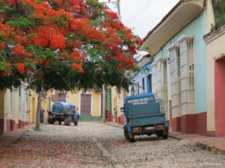 Beautiful orange tree @ Trinidad