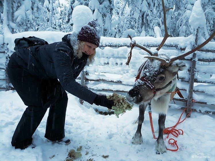 Feeding the reindeer at Wolverine Fell Levi