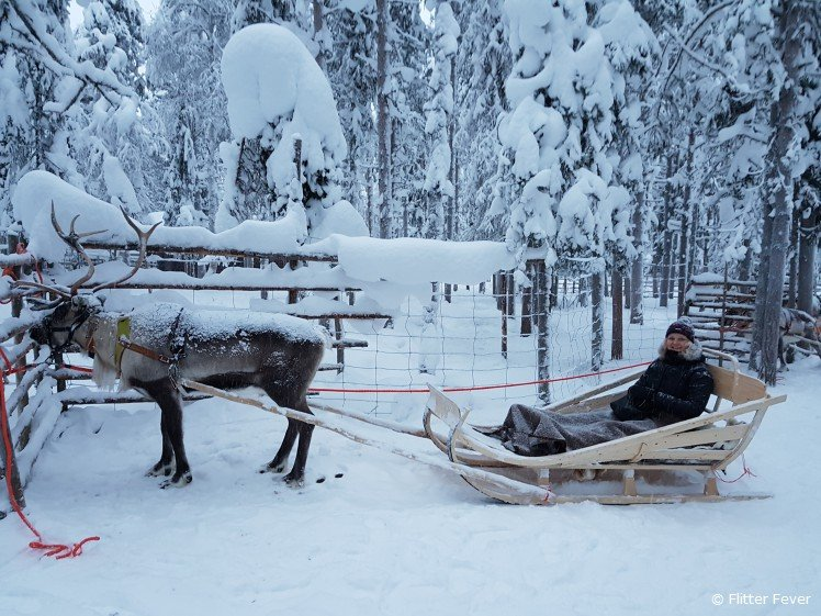 Getting ready for a reindeer sleigh ride
