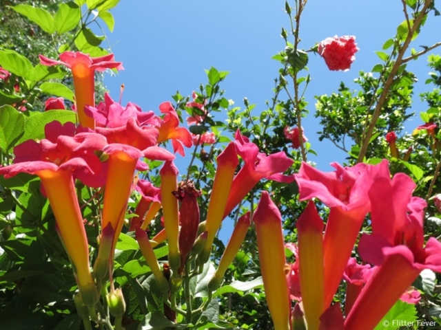 Gorgeous pink flowers in the sun in Stellenbosch
