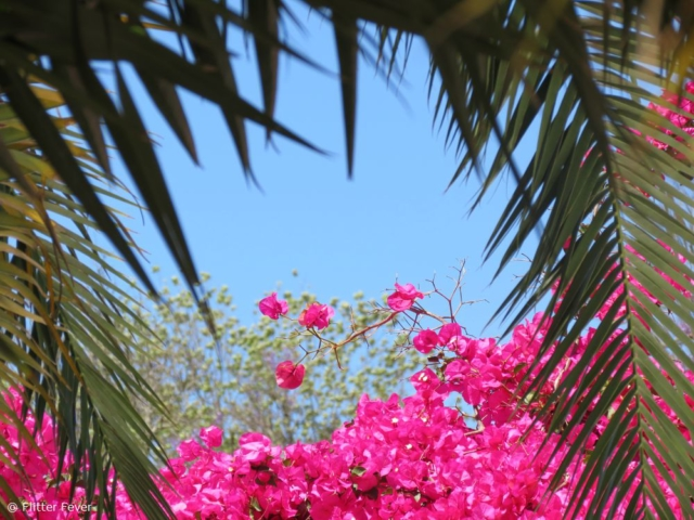 Palm leaves and pink flowers in the sun @ Stellenbosch