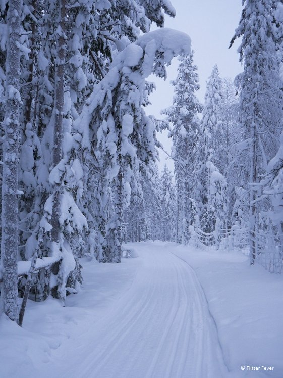 Road in snowy landscape Finnish Lapland