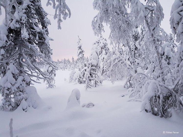 Snowy forest Levi Finnish Lapland
