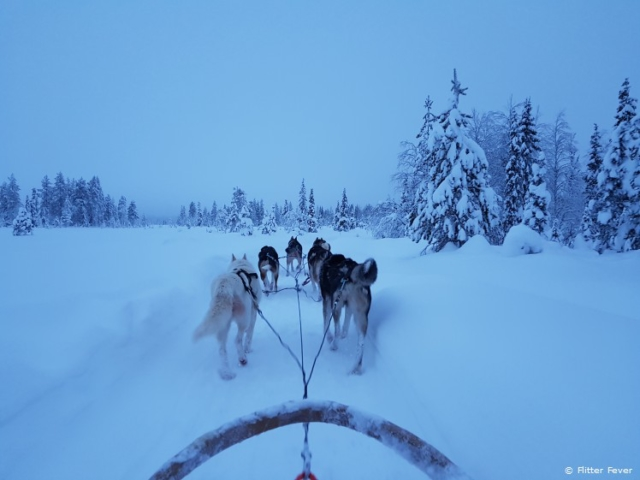Snow white environment and doggies... Could life be more perfect?!