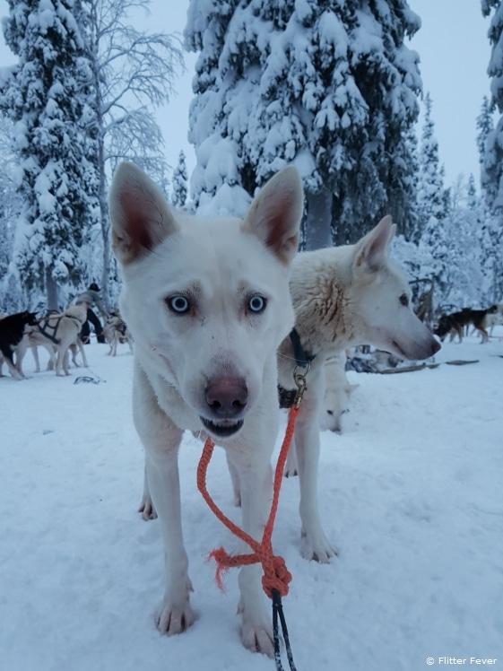 Selfie doggy?