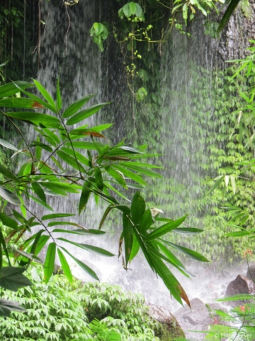 The beauty of nature @ Bali