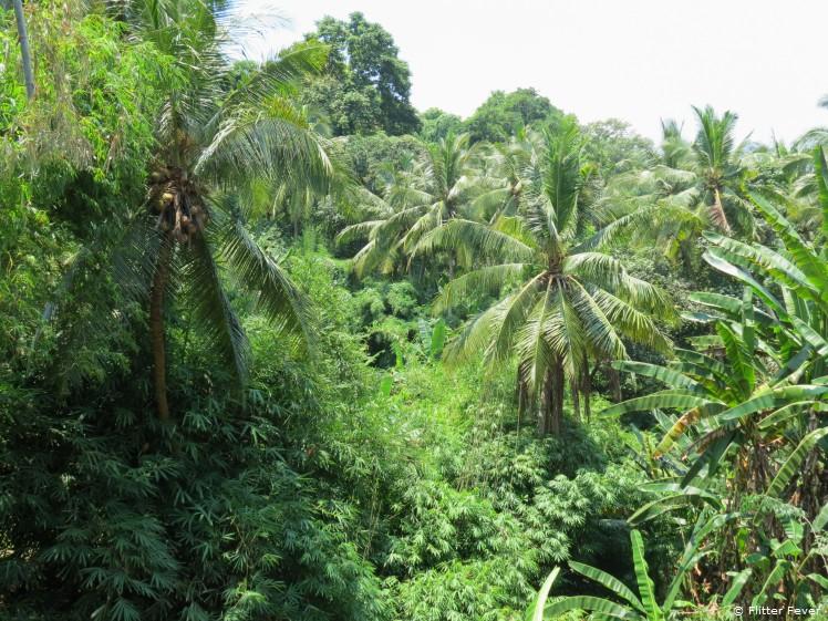 Rain forest @ Bali