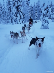 Excited dogs waiting to get running again