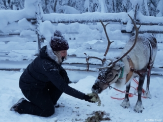 Feeding the reindeer after the first ride