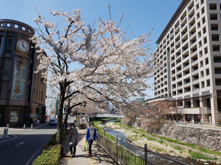 Bloesembomen bij de rivier in Matsumoto