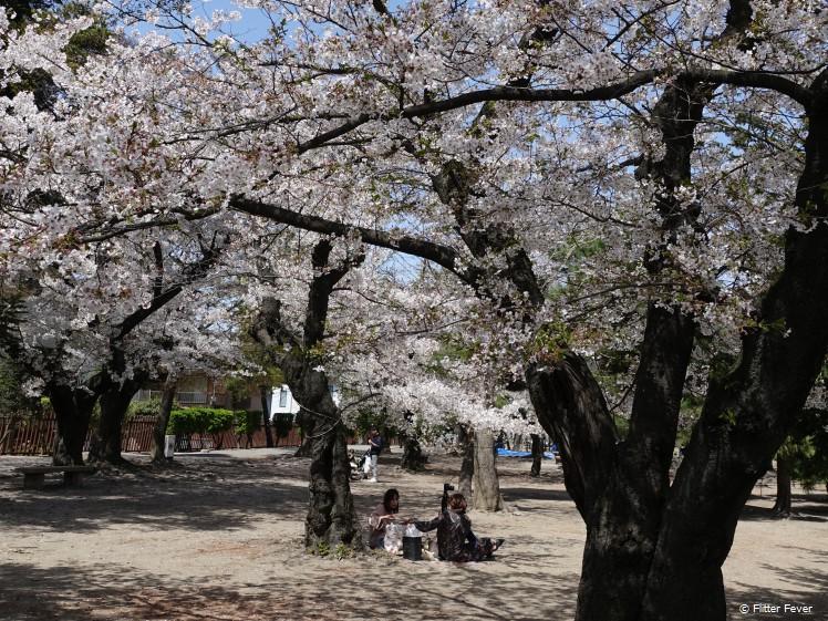 Vrienden picknicken onder de bloesemboom bij het kasteel van Matsumoto