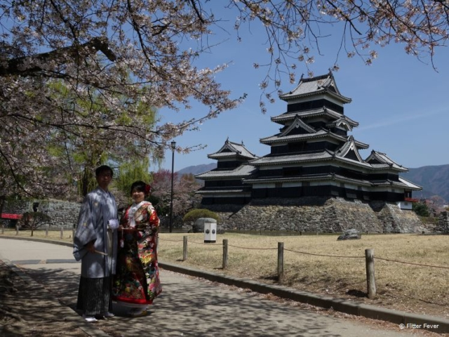 Couple in traditional Japanese clothes under the blossom tree @ Matsumoto Castle, Japan