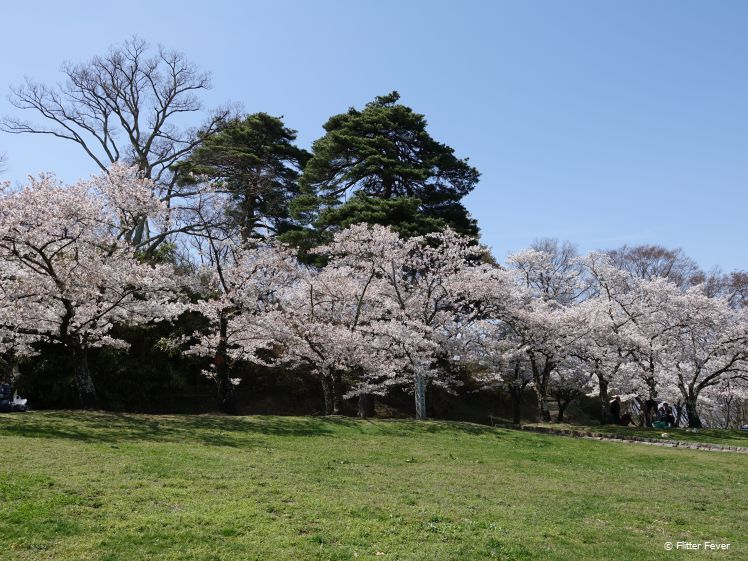 Bloesembomen in Joyama Park Matsumoto