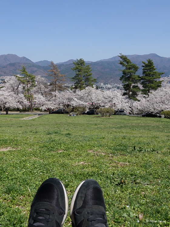 Relaxing at Joyama Park with blossom and mountain view