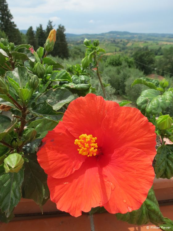 Beautiful flower at the balcony of our room at agriturismo