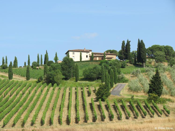 Vineyards of Fattoria Poggio Alloro
