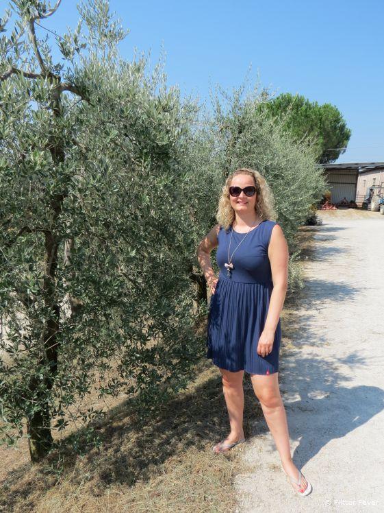 Olive trees at the farm of Fattoria Poggio Alloro