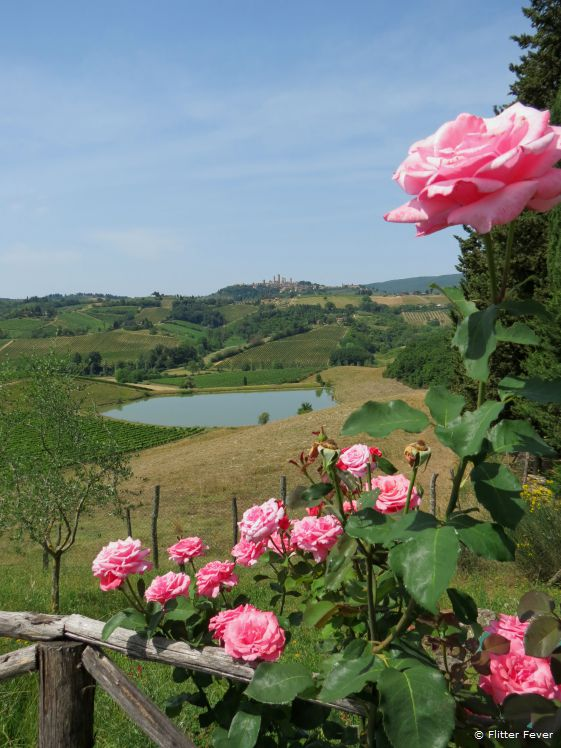 Pink roses and a beautiful view of San Gimignano, Tuscany, Italy
