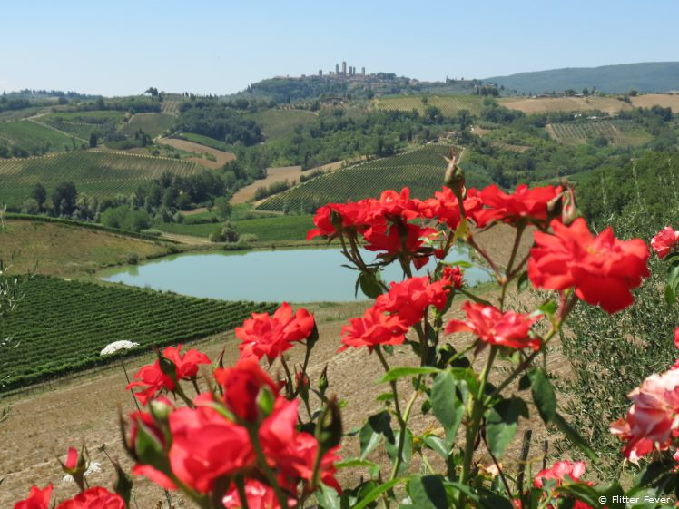 Red roses and San Gimignano view