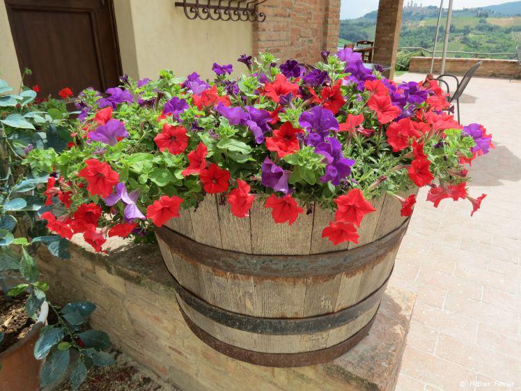 Wonderful flowers at Fattorio Poggio Alloro