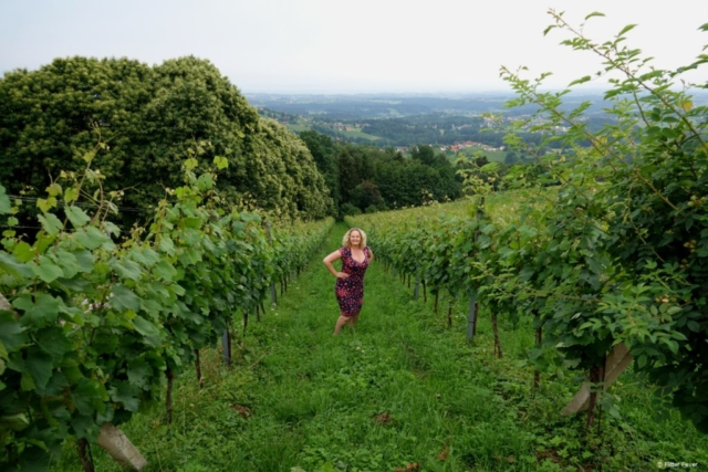Vineyards in Schilcherlandl, Austria
