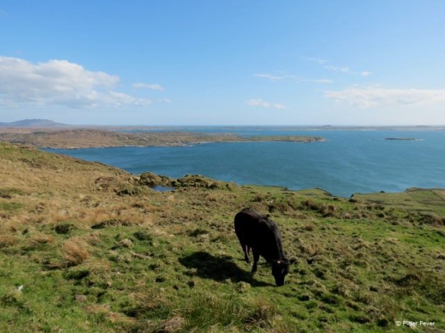 Connemara loop view