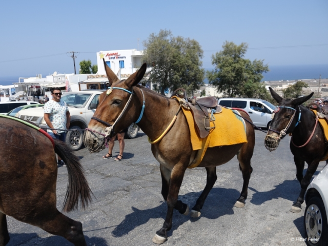 Muzzled horses in Oia