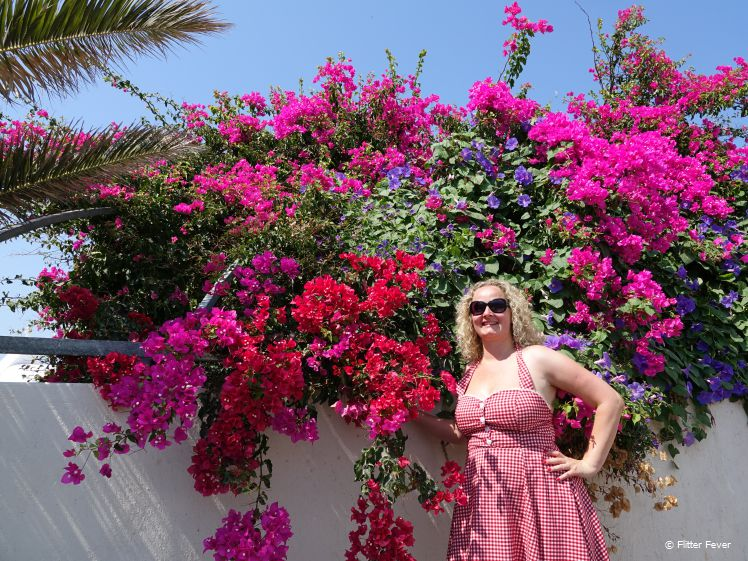 Wonderful flowers in Santorini