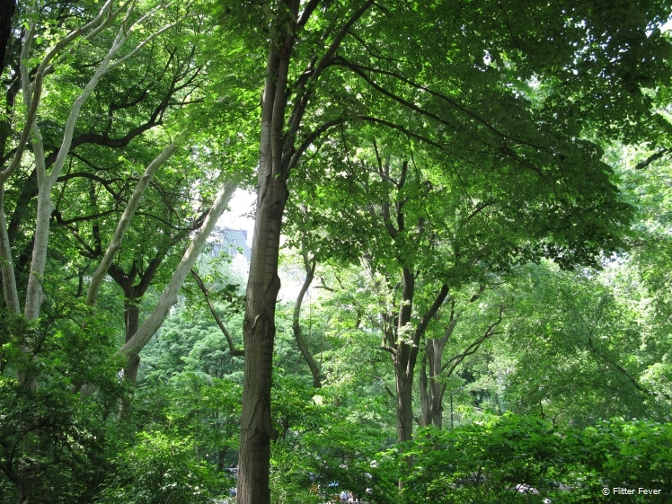 Lush green trees in Central Park in May