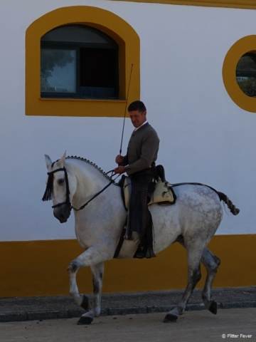 A man and his horse at the Royal Andalusian School of Equestrian Art