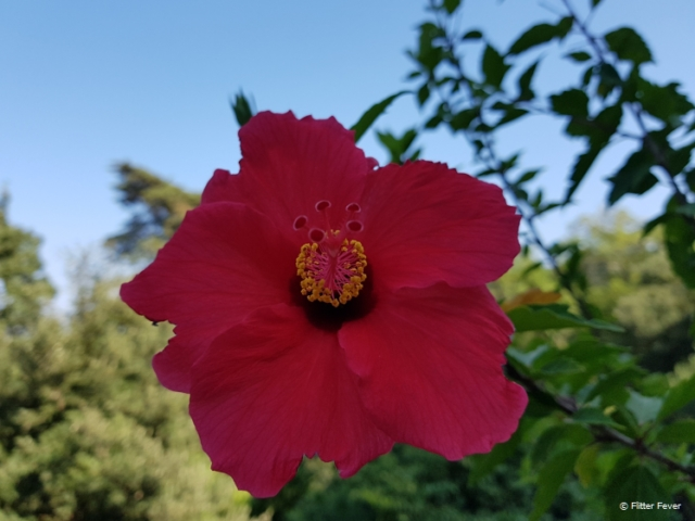 Beautiful flower in Monserrate Park