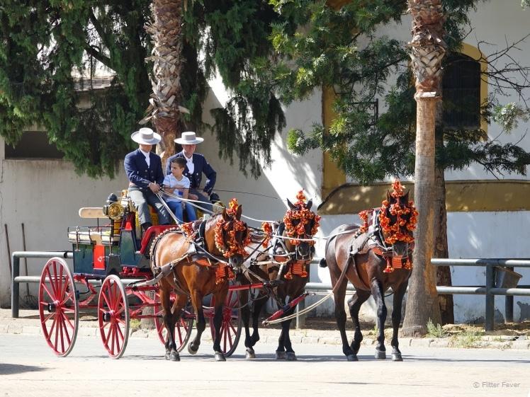 Carrousel met bruine Andalusische paarden