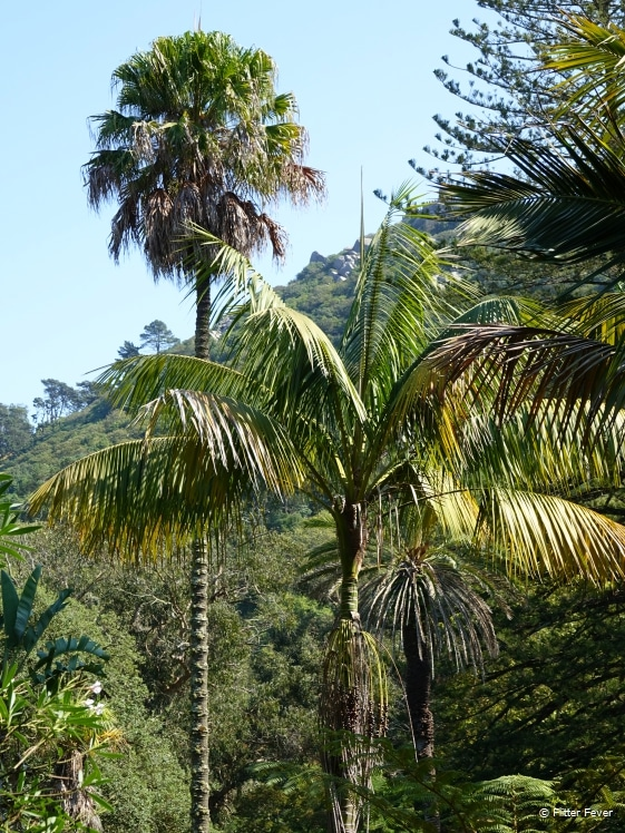 Tropical vegetation in Sintra Portugal