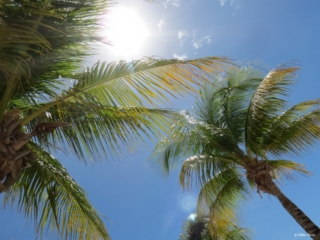 Palmtrees and sunshine is what most Dutchies like during their vacation abroad
