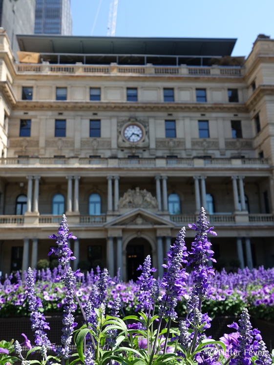 Customs House with lavender in Sydney