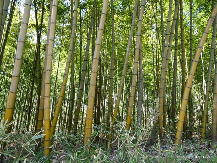 Bamboo at Nakasendo Trail Japan