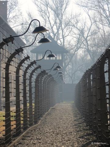 Barb wire fences at Auschwitz camp 1