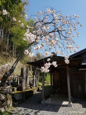 Blossom in Magome