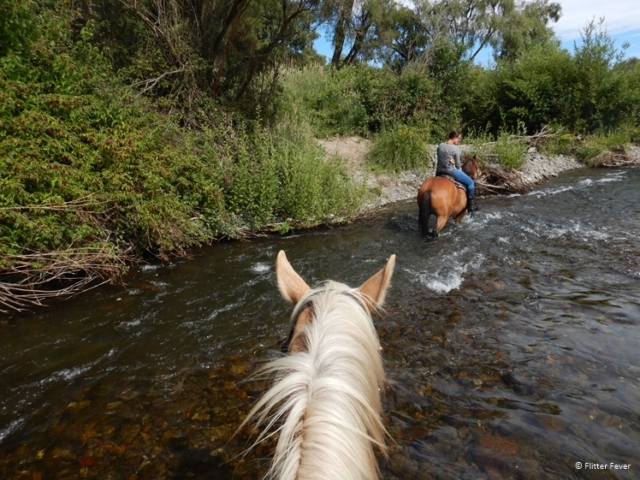 Going into the river together @ Korohe Horse Treks in Turangi