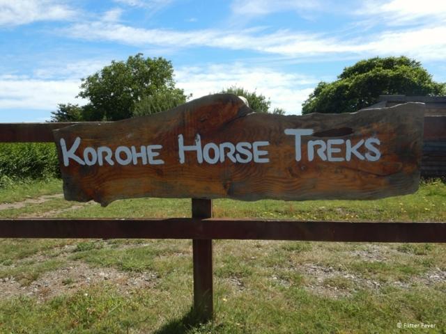 Korohe Horse Treks in Turangi