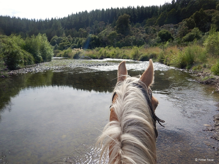 My beautiful brave horse Uira at the Waimaro River