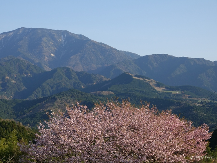 Pink blossom and mountain in Magome