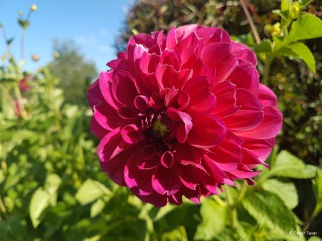 Pretty pink flower in Turangi