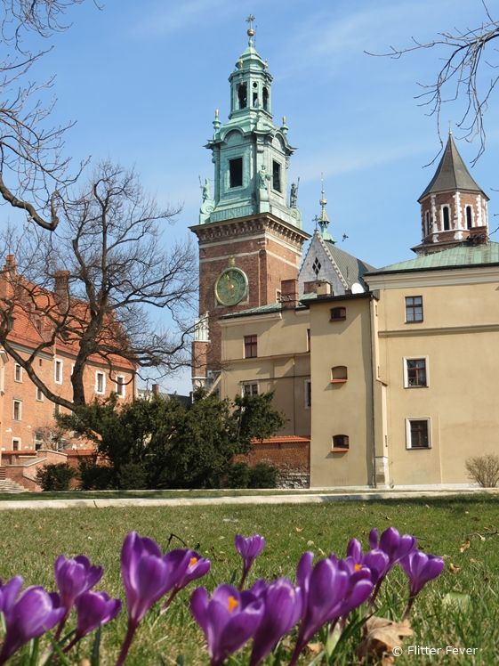 Spring flowers at Wawel Royal Castle and Cathedral Krakow