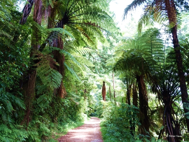 The Blue Lake Walk with gorgeous green ferns