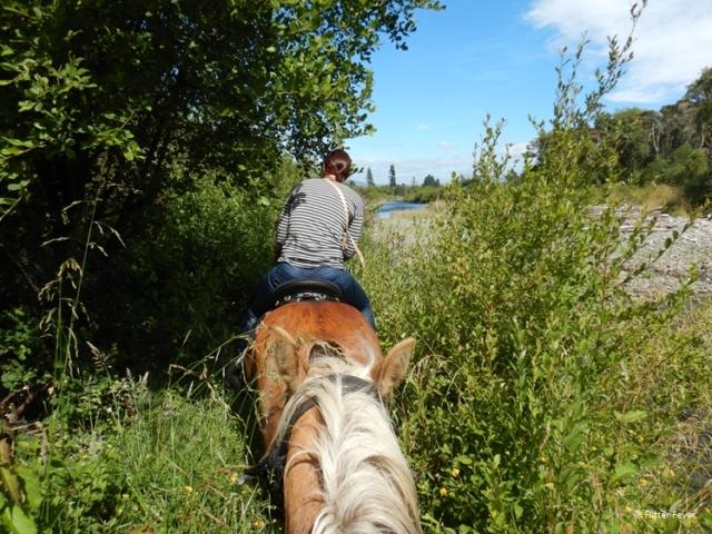 Watch your head when riding the bush bush